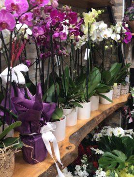 Renkli Orkideler