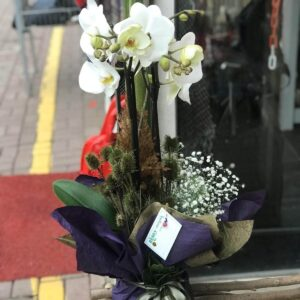 Üç Dallı Beyaz Orkide