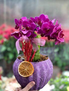 Mini Orkide Arajmanı